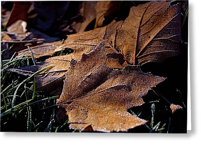 Sycamore Greeting Cards - Lightly Frosted Greeting Card by Rona Black