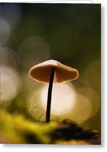 Round Fungi Greeting Cards - Lightning Greeting Card by Kent Mathiesen