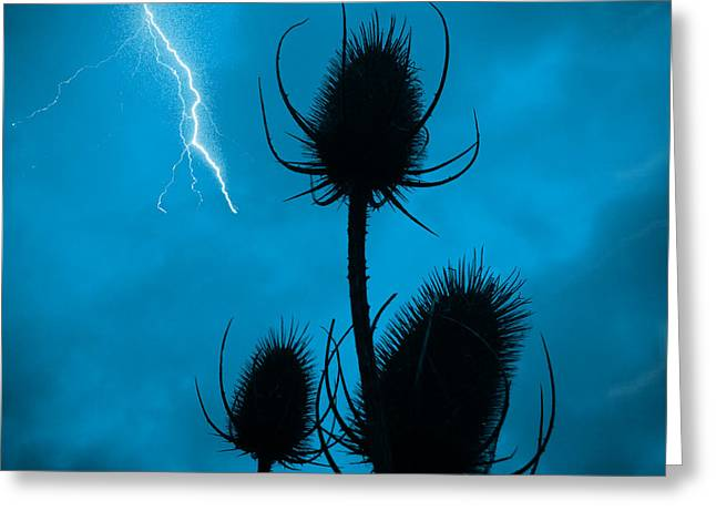 Lightning Spikes Greeting Card by Michael Rucker