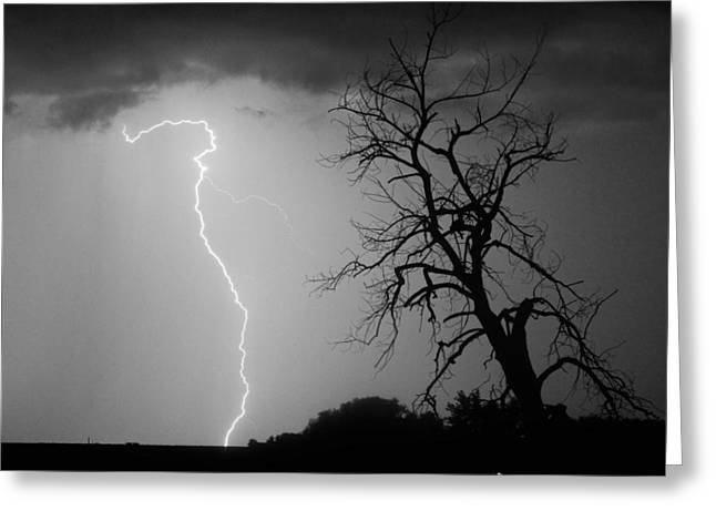 Lightning Bolt Pictures Greeting Cards - Lightning Tree Silhouette Black and White Greeting Card by James BO  Insogna