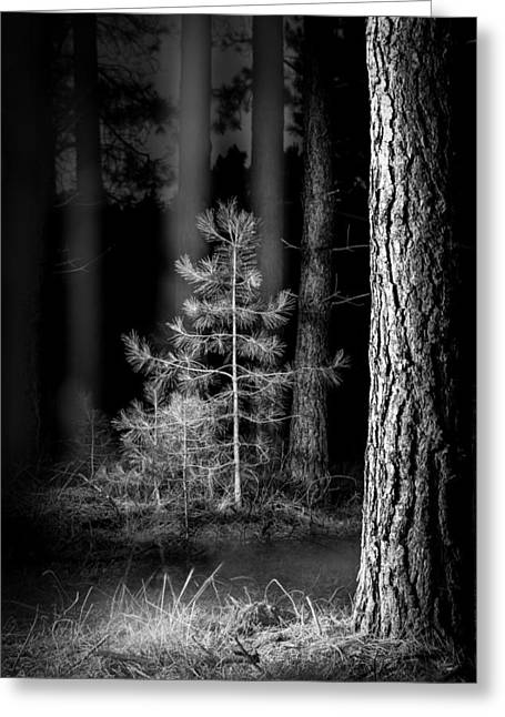 Foilage Greeting Cards - Lightpainting The Pine Forest New Growth Greeting Card by Dirk Ercken