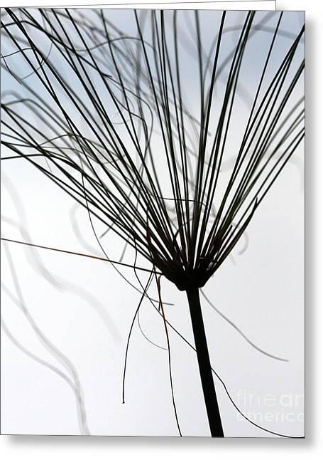 Weedy Greeting Cards - Like a Broom Greeting Card by Sabrina L Ryan