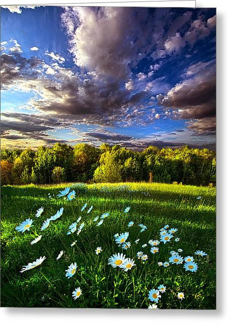 Daisy Greeting Cards - Like All Things Created Greeting Card by Phil Koch