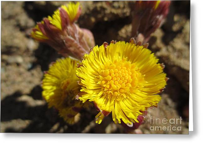 Like Flowers In A Desert Greeting Card by Martin Howard