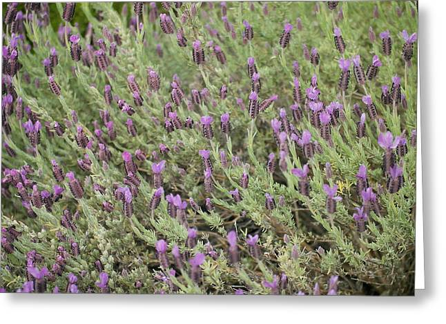 Ground Cover Greeting Cards - Like One Hundred Little Blue Miracles Greeting Card by Jeff  Swan