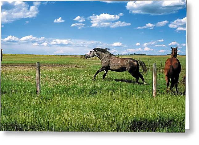 Rural Greeting Cards - Like the Wind 2 Greeting Card by Terry Reynoldson