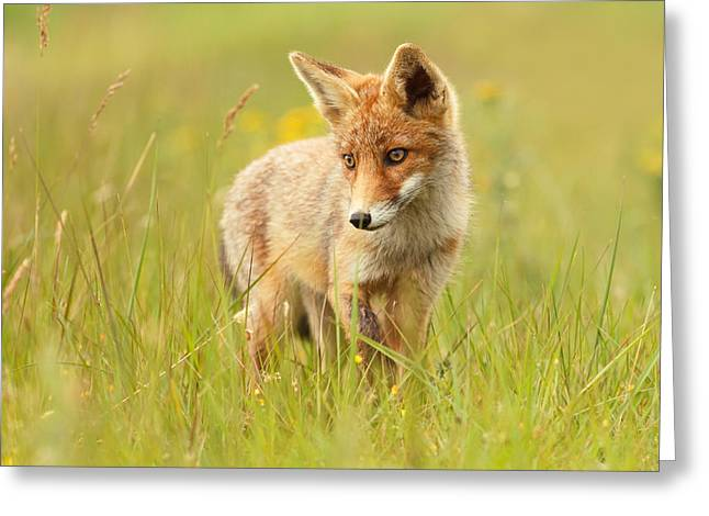 Suckling Greeting Cards - Lil Hunter - Red Fox Cub Greeting Card by Roeselien Raimond