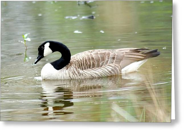 Geese Greeting Cards - Lila Goose Queen of the Pond 2 Greeting Card by Lesa Fine