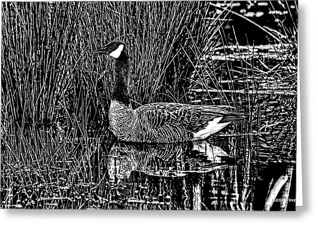 Goose Greeting Cards - Lila Goose the Pond Queen HDR GRASS ART BW Greeting Card by Lesa Fine