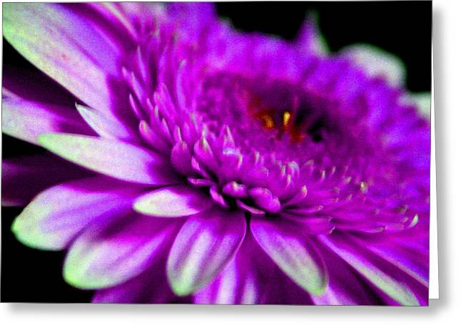 Commercial Photography Pastels Greeting Cards - Lilac Beauty H b Greeting Card by Gert J Rheeders