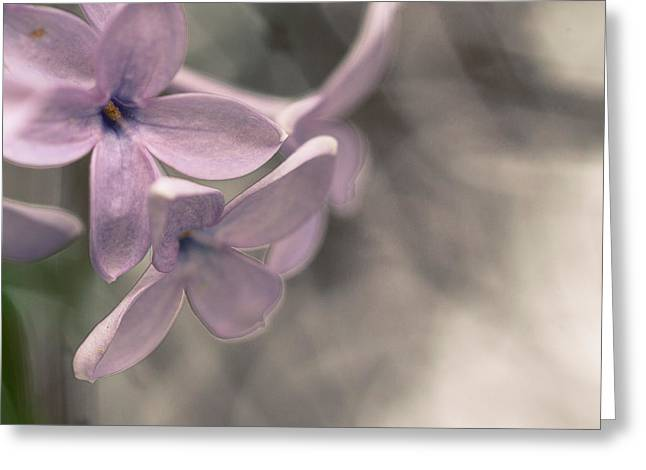 Artistic Photography Greeting Cards - Lilac Greeting Card by Constance Fein Harding