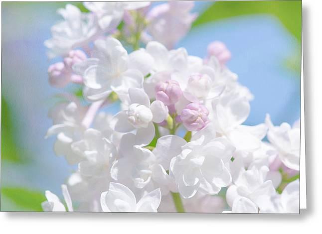 Oleaceae Greeting Cards - Lilac Flowers Greeting Card by Alexander Senin