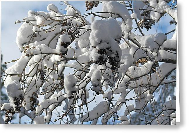 Lilac in Winter Greeting Card by Michele Myers