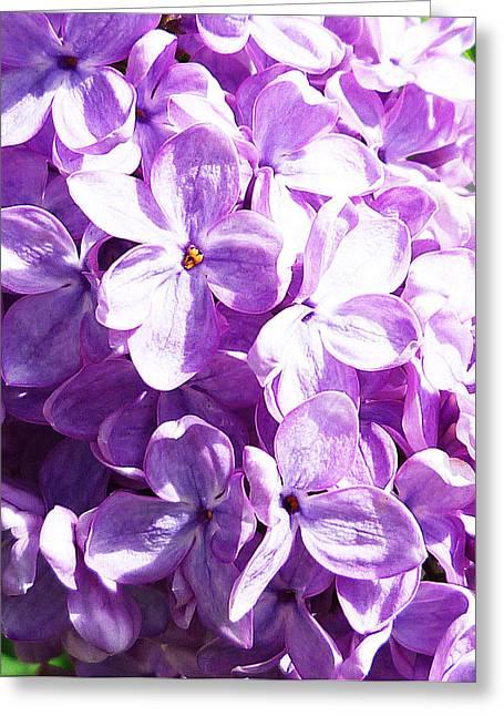 Close Views Greeting Cards - Lilac Greeting Card by Irina Sztukowski