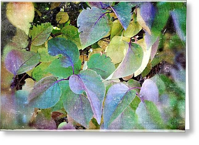 Cellphone Digital Art Greeting Cards - Lilac Leafs 2 Greeting Card by Susan Kinney
