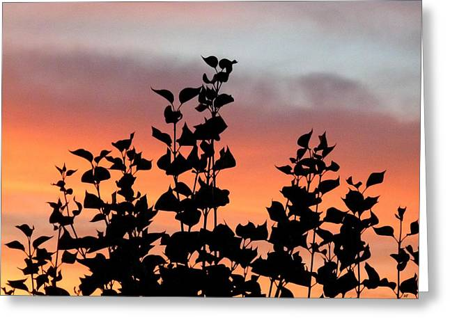 Lilac Greeting Cards - Lilac Leaves Silhouette Greeting Card by Will Borden