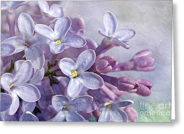 Maine Spring Greeting Cards - Lilacs Greeting Card by Cindi Ressler