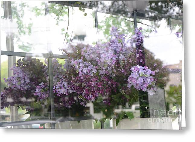 Lilac Greeting Cards - Lilacs Hanging Basket Window Reflection - Dreamy Lilacs Floral Art Greeting Card by Kathy Fornal