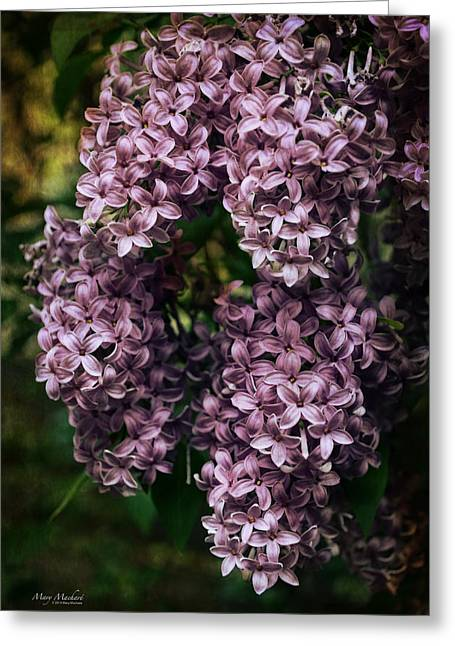 Lilac Greeting Cards - Lilacs in Bloom Greeting Card by Mary Machare