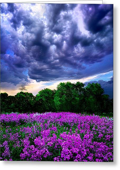 Geographic Photographs Greeting Cards - Lilacs Greeting Card by Phil Koch