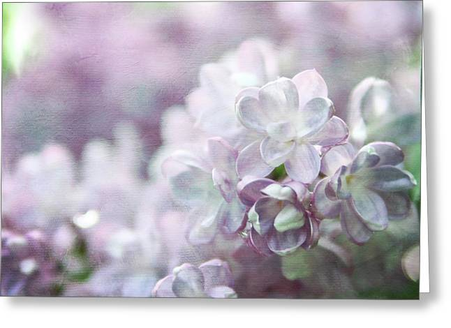 Lilac Greeting Cards - Lilacs Greeting Card by Sylvia Cook