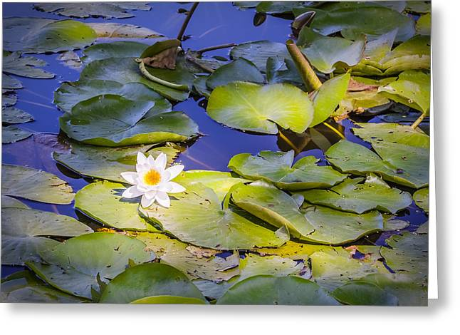 Green Day Greeting Cards - Art 0031 Water Lily - Ray of sunlight Greeting Card by Sebastiaan Lartiste