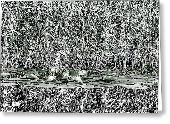 Morass Greeting Cards - Art 0058 Lilies - Reed Reflections Black and White Greeting Card by Sebastiaan Lartiste