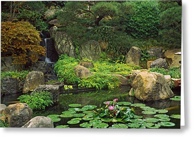 Pond Photography Greeting Cards - Lilies In A Pond At Japanese Garden Greeting Card by Panoramic Images