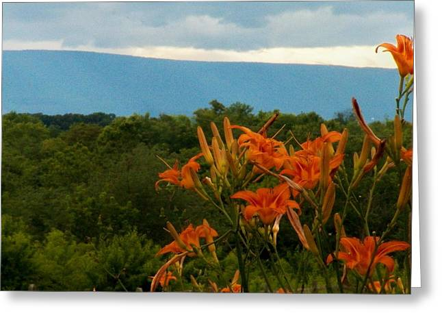 Shenandoah Valley Greeting Cards - Lilies in the Valley Greeting Card by Joyce Kimble Smith