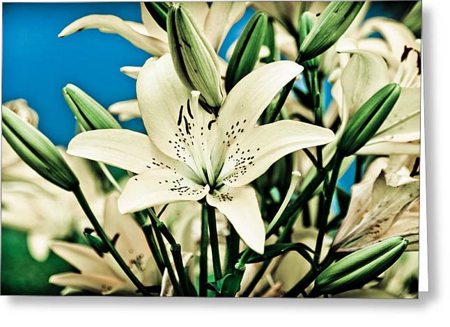 Lilies Pyrography Greeting Cards - Lilies in White Greeting Card by Shirley Tinkham