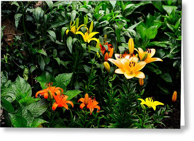 Stigma Greeting Cards - Lilies Greeting Card by Marco Oliveira