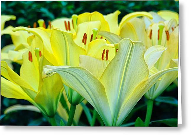 High Stakes Greeting Cards - Lilies Greeting Card by Nelin Reisman