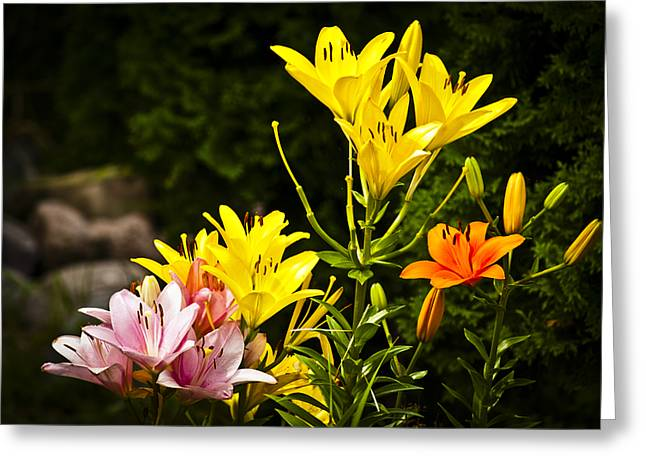 Day Lilly Greeting Cards - Lilies of the Garden Greeting Card by Christi Kraft