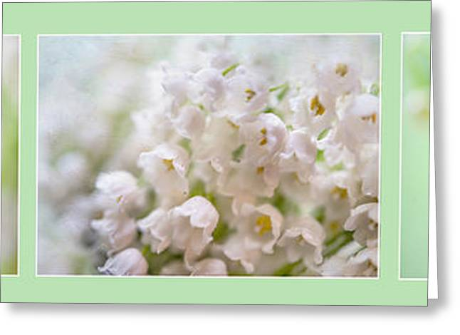 The Mint Greeting Cards - Lilies of the Valley. Triptych Greeting Card by Jenny Rainbow