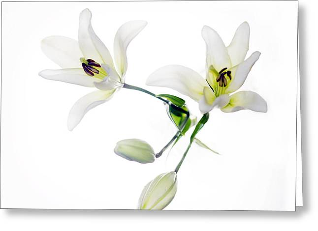 White Lily Greeting Cards - Lilies Greeting Card by Rebecca Cozart