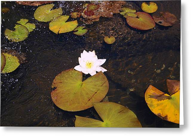 Ly Greeting Cards - Lilies Shall Remain Greeting Card by Raven Lynch