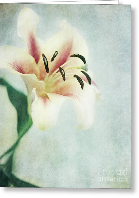 Lilium Greeting Cards - Lilium Greeting Card by Priska Wettstein