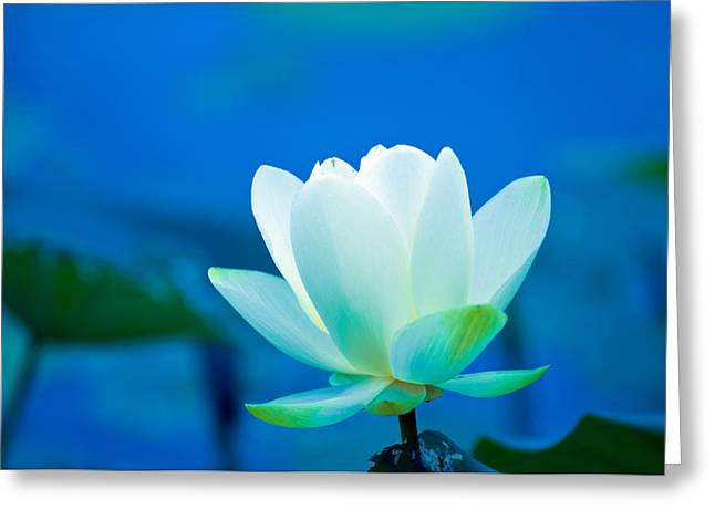 Inner Self Photographs Greeting Cards - Lillie Inner Glow  Greeting Card by Randall Branham