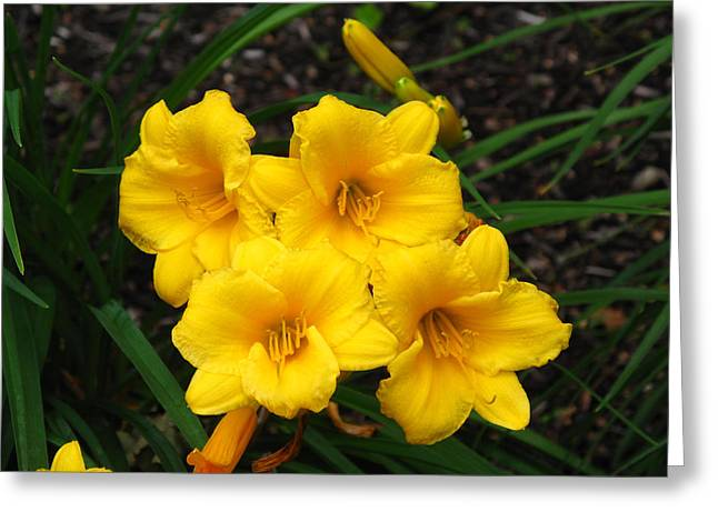 Best Sellers -  - Day Lilly Greeting Cards - Lillies Greeting Card by Barbara McDevitt