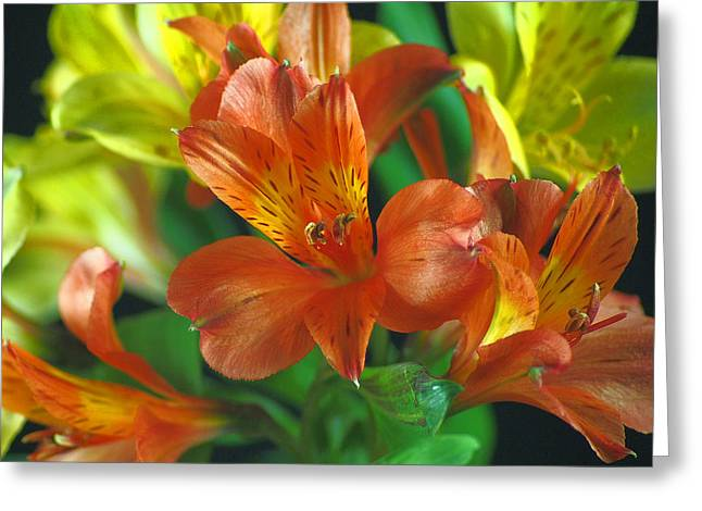 Lillies Galore Greeting Card by Wobblymol Davis