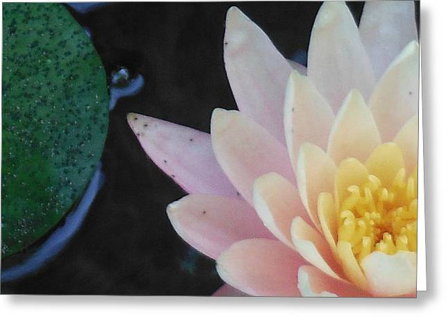 Lilly Greeting Card by Lori Thompson