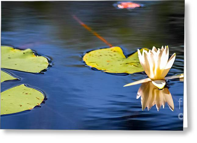Lilly Pads Mixed Media Greeting Cards - Lilly pad and flower Greeting Card by Optical Playground By MP Ray