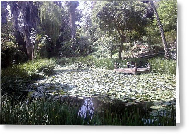 Water Lilly Greeting Cards - Lilly pad Garden Greeting Card by Jennifer Carrillo
