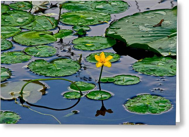 Lilly Pad Greeting Cards - Lilly Pad Pond Greeting Card by Frozen in Time Fine Art Photography