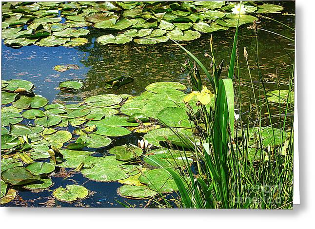 Waterlife Greeting Cards - Lilly Pad Pond Greeting Card by Steven Baier