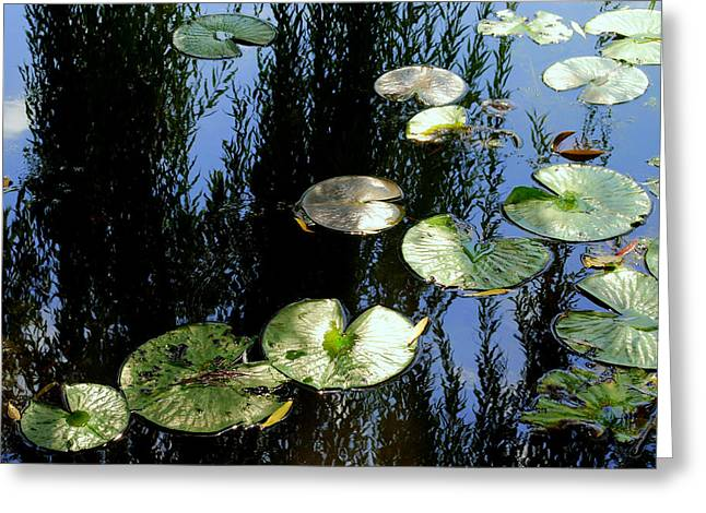 Lilly Pads Greeting Cards - Lilly Pad Reflection Greeting Card by Frozen in Time Fine Art Photography