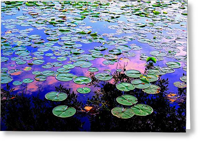 Lilly Pad Sunset Greeting Card by Wendell Lowe