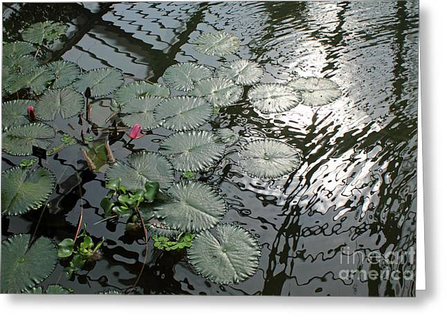 Lilly Pad Greeting Cards - Lilly Pads at Kew Gardens London Greeting Card by Julia Gavin