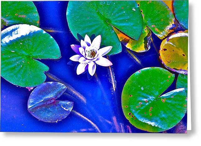 Lilly Pads Greeting Cards - Lilly Pads Greeting Card by David Flitman