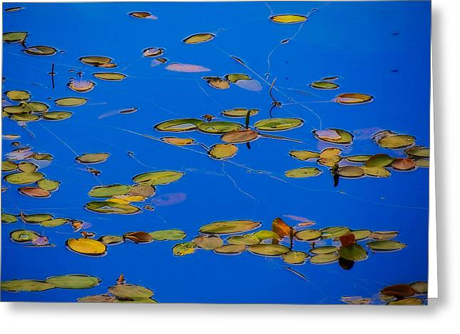 Blue Green Water Tapestries - Textiles Greeting Cards - Lilly Pads Greeting Card by Dennis Bucklin